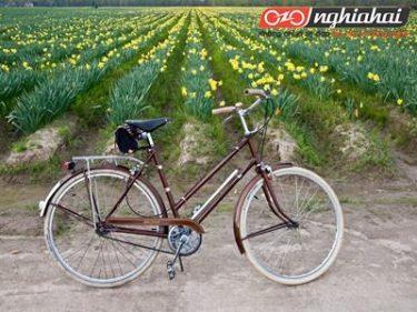 Lưu ý khi chọn mua xe đạp địa hình nhập khẩu 3